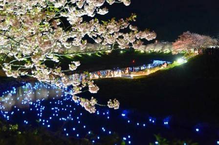 夜桜流れ星 黒田① s