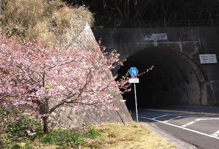 弥陀トンネルのさくら