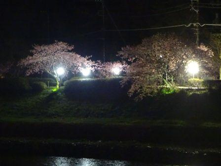 夜桜2016 ①