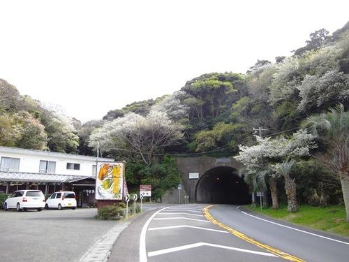山桜 弥陀山トンネル
