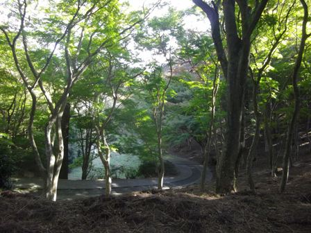自然公園 道