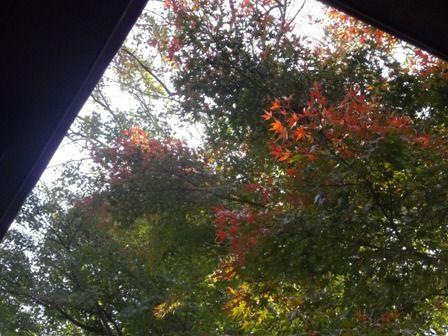 自然公園 ちょっとだけ紅葉