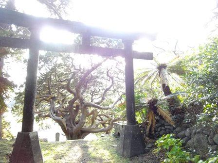 太陽がまぶしい白鳥神社