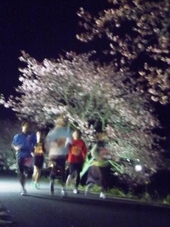 夜桜ナイトラン ②