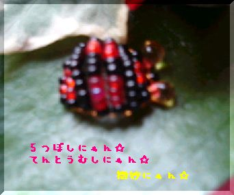DSC025680006.jpg