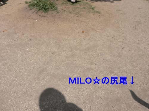 img20050425_4.jpg
