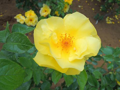 レモン フィズsDSCN3873