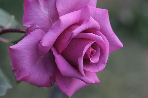 しうん 紫雲5012