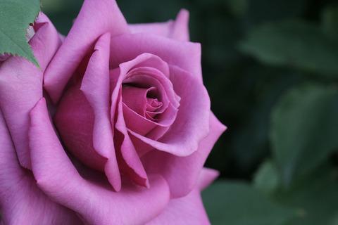 しうん 紫雲5015