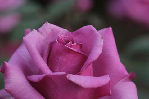 しうん 紫雲5018