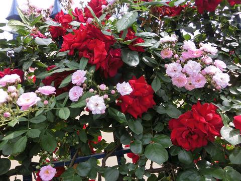 他の花とミックス2517