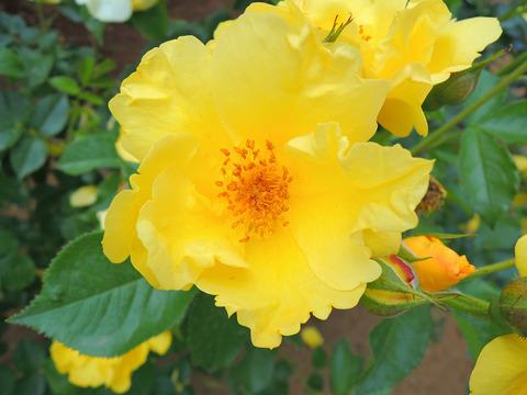 レモン フィズsDSCN3876