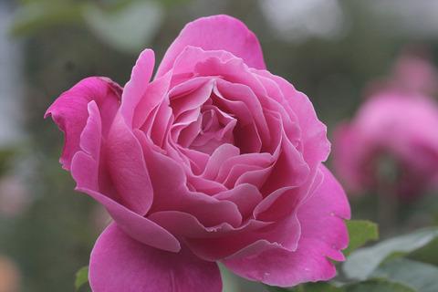 ピンク ピース6535