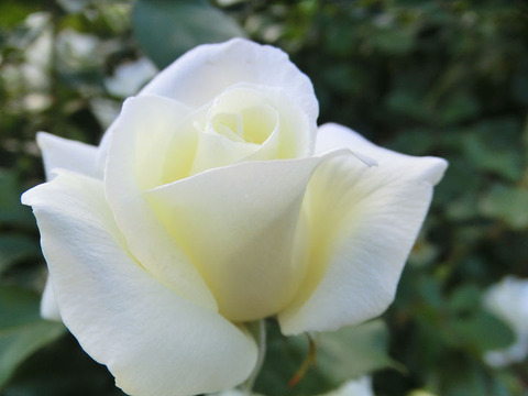 ホワイト マジック5188
