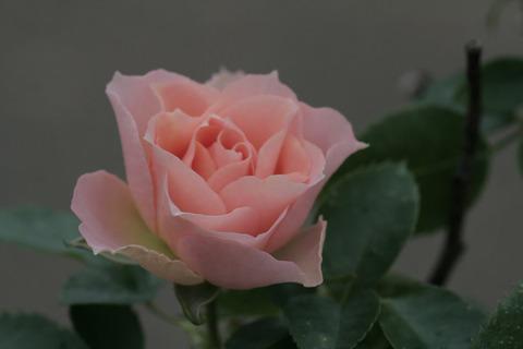 ロマンティック レースsIMG_7667