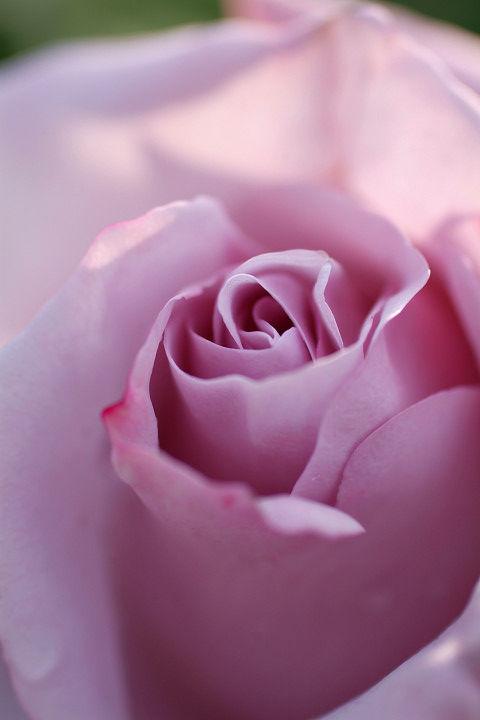 しこう 紫香