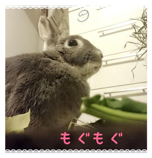 2015-04-09-11-30-36_deco