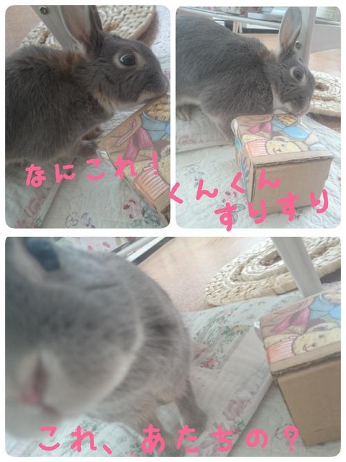 2015-03-13-00-39-59_deco