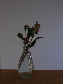 2-21花・ヒペリカム1