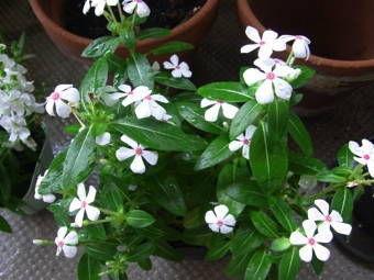 8-1白い花1