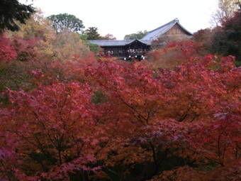 11-26東福寺1