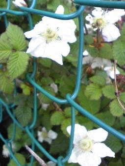 21近所の花1