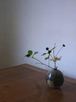 9-7マンマミーアの花