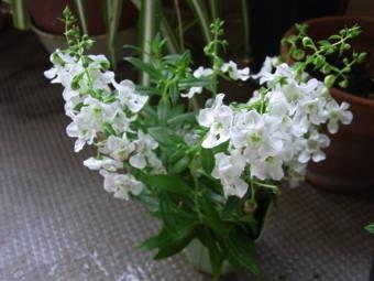 8-1白い花2