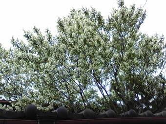 21近所の木