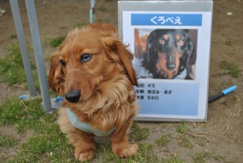 湘南犬親会4月4日-12taka