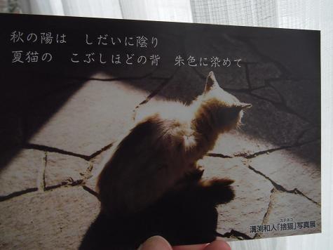 10-ねこ写真(城ヶ島に生きる野良猫たち)5