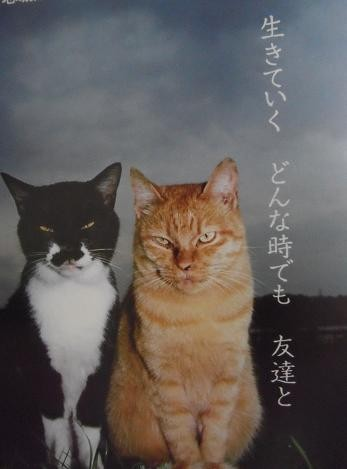 10-ねこ写真(城ヶ島に生きる野良猫たち)6