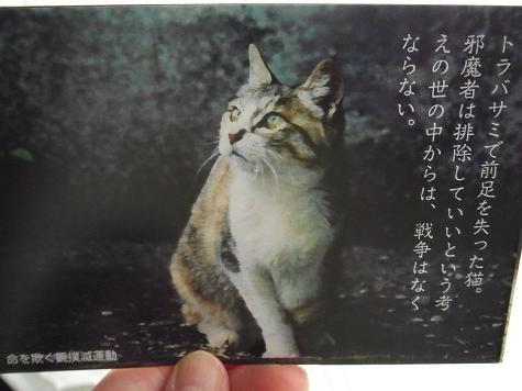 10-ねこ写真(城ヶ島に生きる野良猫たち)3