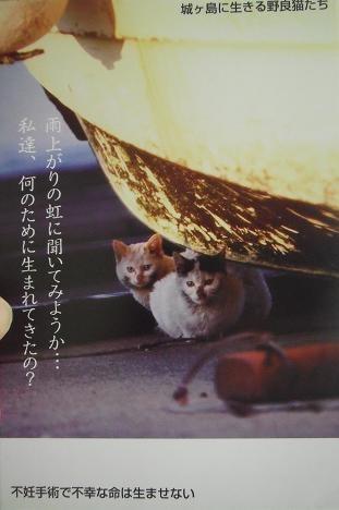 10-ねこ写真(城ヶ島に生きる野良猫たち)2