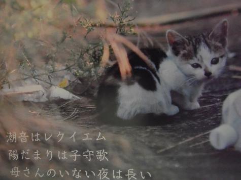 10-ねこ写真(城ヶ島に生きる野良猫たち)1