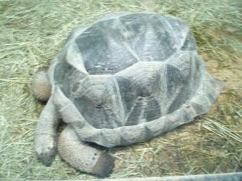 aldabra.jpg
