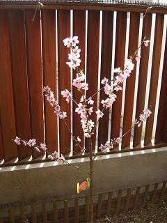 flowerpeach.jpg