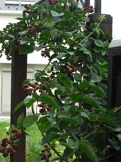 0706blackberryarch.jpg