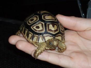 Reptile2006Jan_3.jpg