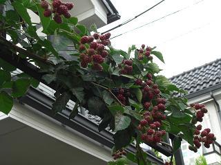 0706blackberryarch1.jpg