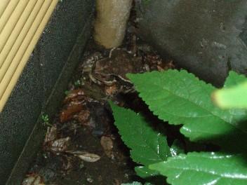 toad1.jpg