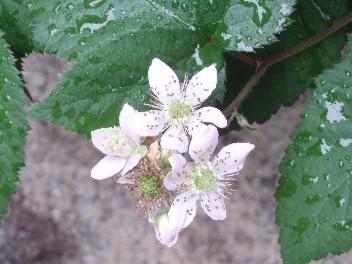 0608flower2.jpg