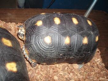 Reptile2006Jan_2.jpg