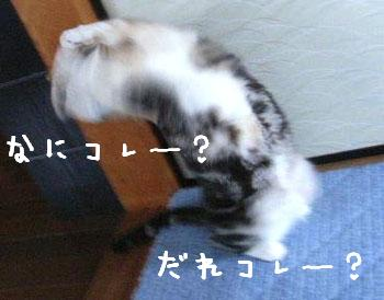 img20060406_2.jpg
