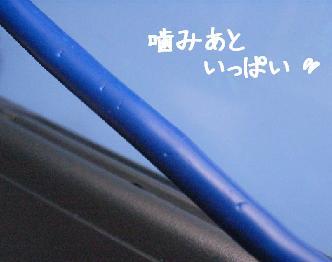 img20060817_1.jpg