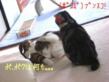 img20061130_4.jpg