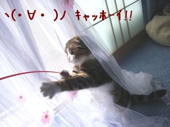 img20060420_5.jpg