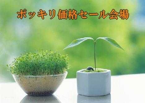 ポッキリ468-234