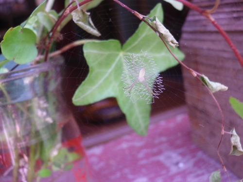 クモの巣アート。