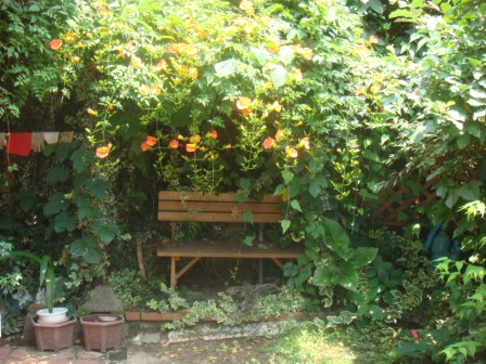 木陰のベンチ。